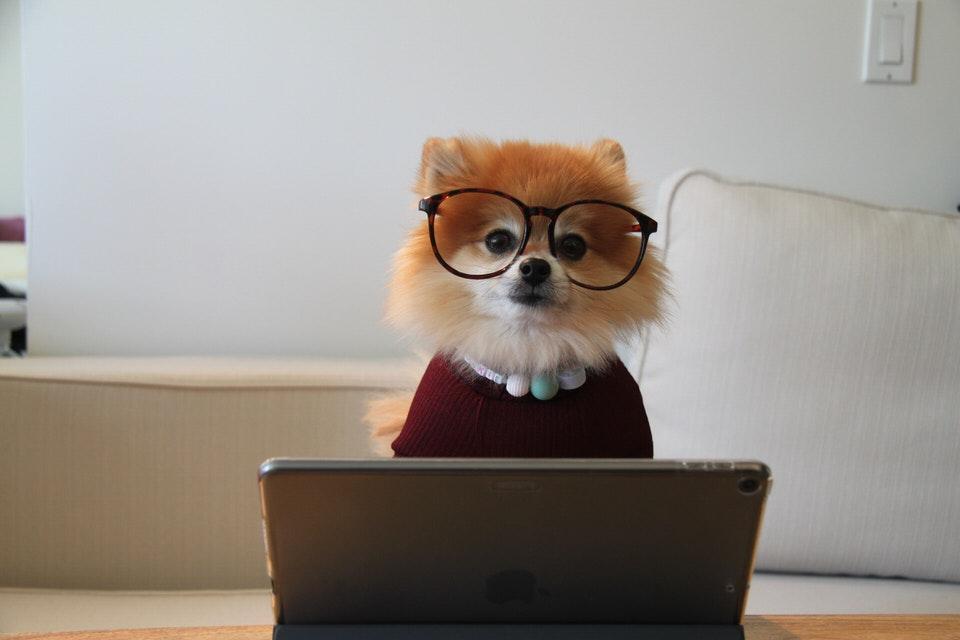 仕事をする犬の画像